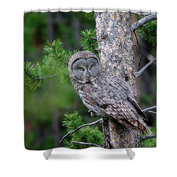 Shower Curtain featuring the photograph Great Gray Owl by Ronnie and Frances Howard