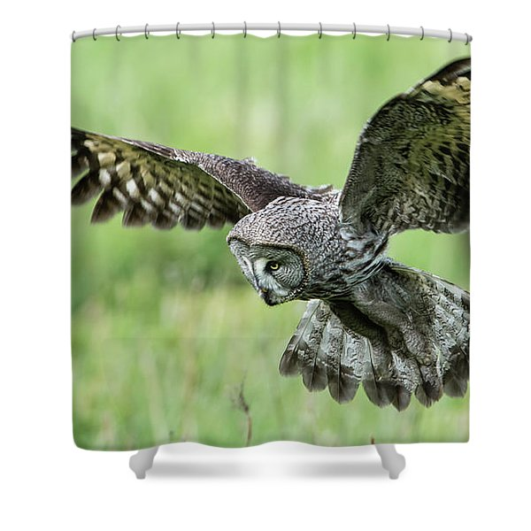 Great Grey's Focused Gaze Shower Curtain