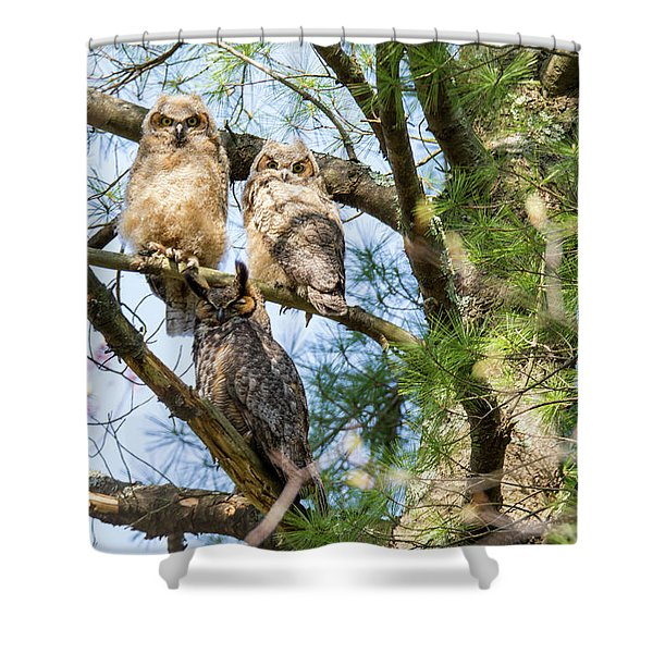Great Horned Owl Family Shower Curtain