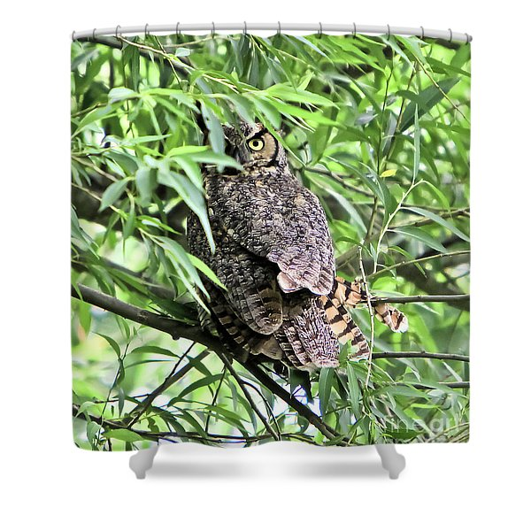 Great Horned Owl Looking At You Shower Curtain