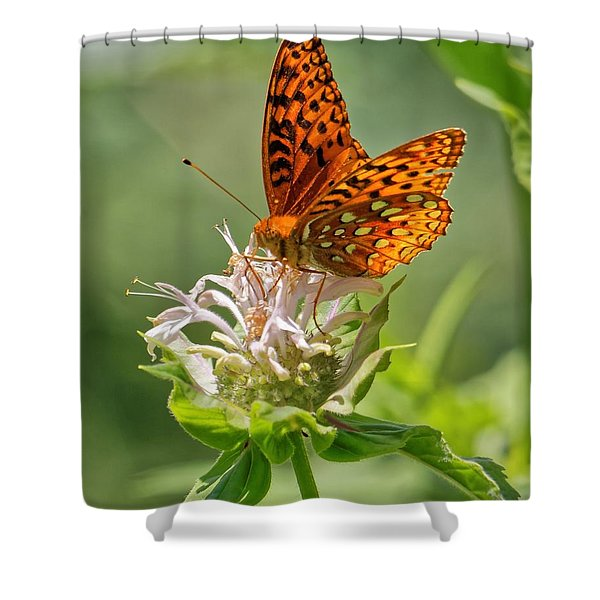 Great Spangled Fritillary On Bee Balm Shower Curtain