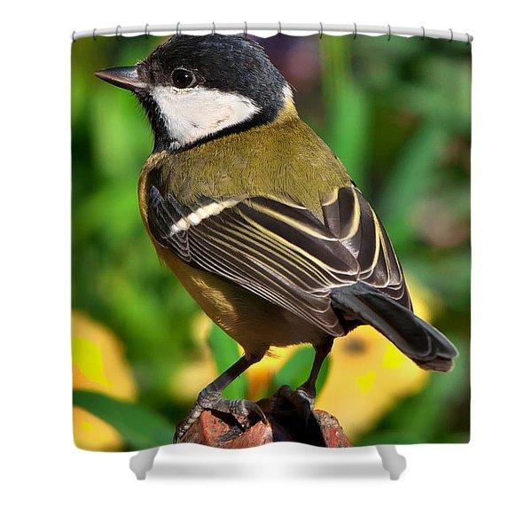 Great Tit British Bird Parus Major Shower Curtain