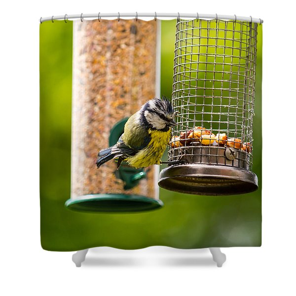 Great Tit Shower Curtain