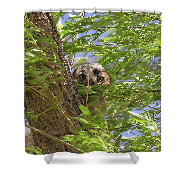 Greathornedowlchick1 Shower Curtain