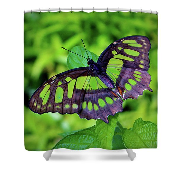 Green And Black Butterfly Shower Curtain