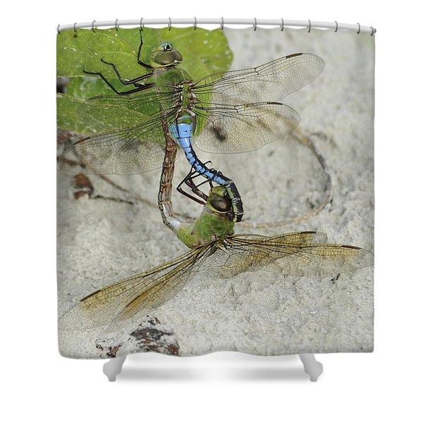 Green Darner Dragonfly  Mating Wheel Shower Curtain