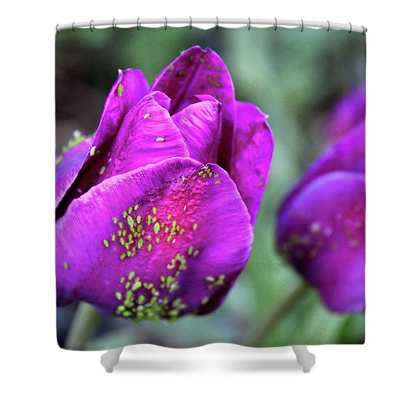Aphids On Purple Tulips Shower Curtain