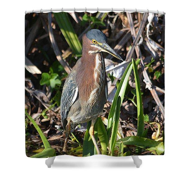 Green Heron Everglades Shower Curtain