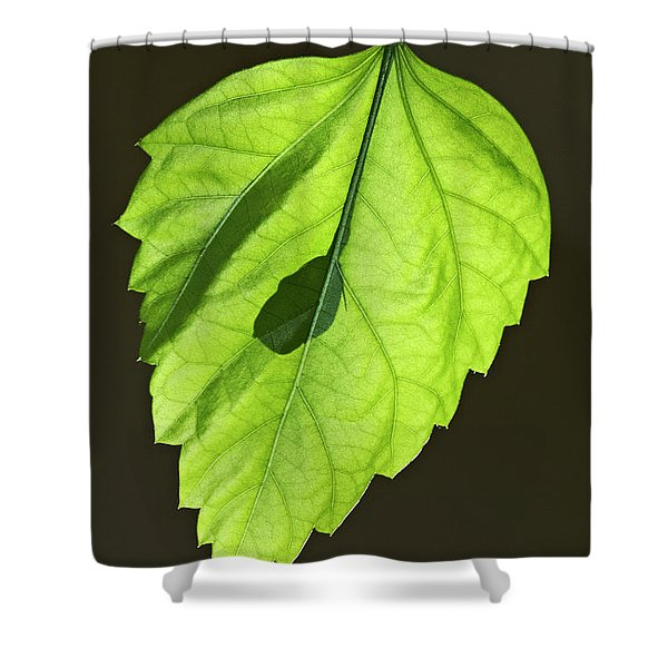 Green Hibiscus Leaf Shower Curtain