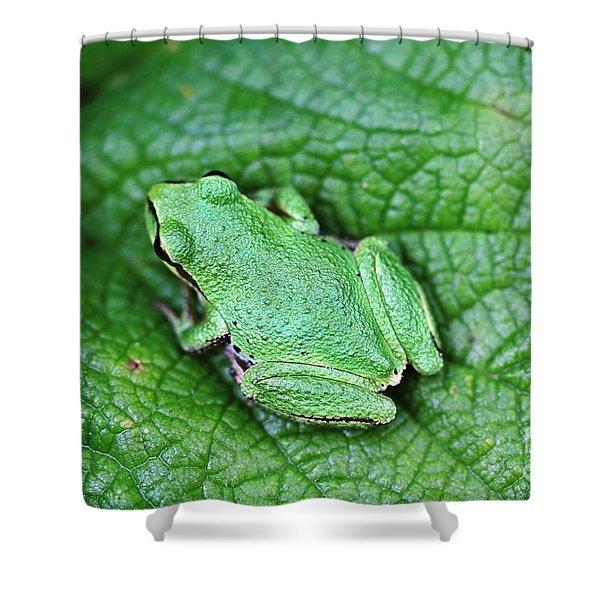 Green Like Me Tree Frog Shower Curtain
