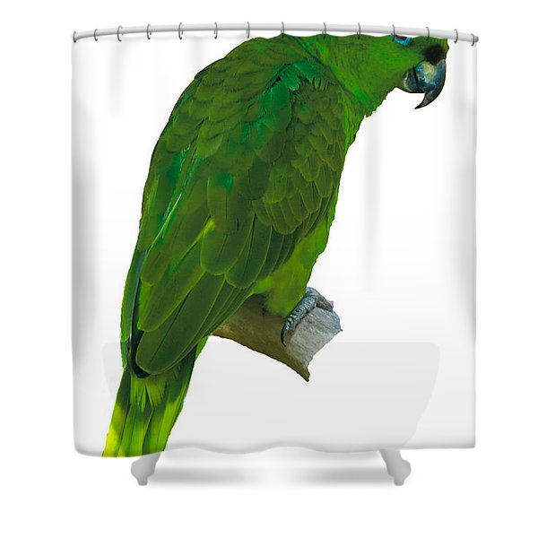 Green Parrot On White  Shower Curtain