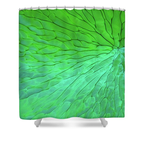 Shower Curtain featuring the photograph Green Pattern Under The Microscope by Beauty of Science