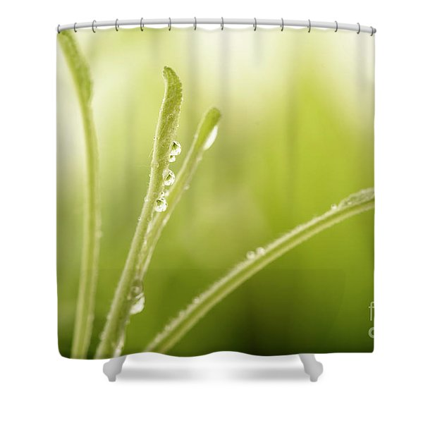 Green Plant With Water Drops Shower Curtain