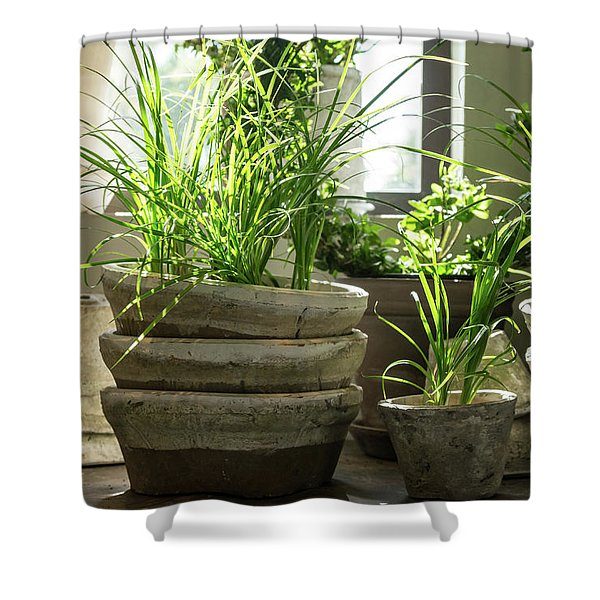 Green Plants In Old Clay Pots Shower Curtain