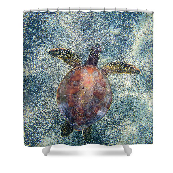 Green Sea Turtle From Above Shower Curtain