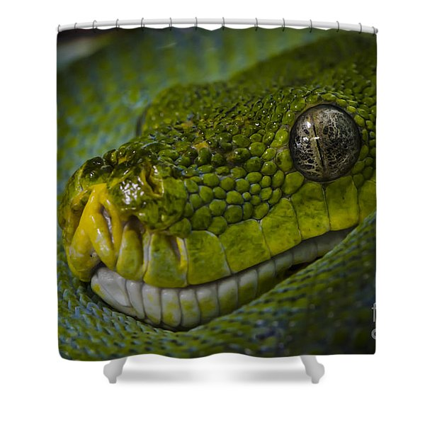 Shower Curtain featuring the photograph Green Snake by Andrea Silies