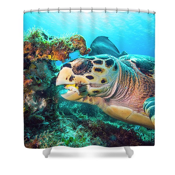 Green Turtle Dining Shower Curtain