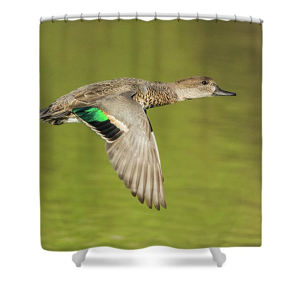 Green-winged Teal 6320-100217-2cr Shower Curtain