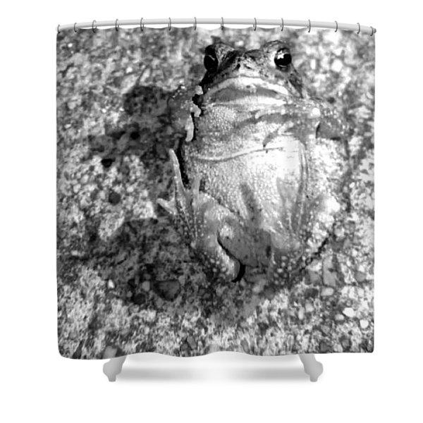 Gregoree The Stranded Frog Shower Curtain