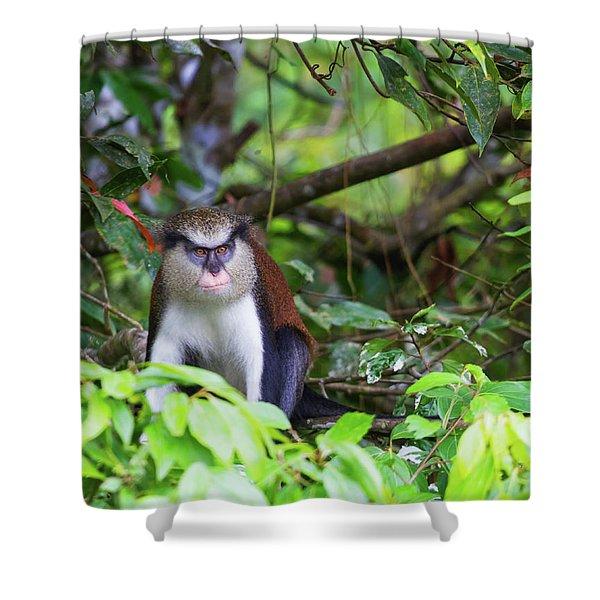 Grenada Monkey 2 Shower Curtain