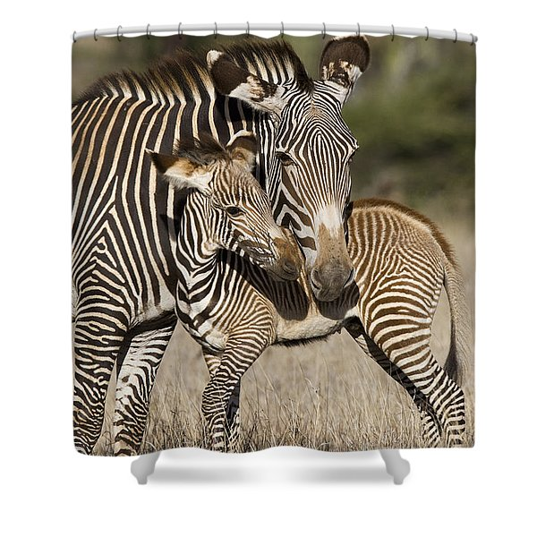 Grevys Zebra And Young Foal Lewa Shower Curtain