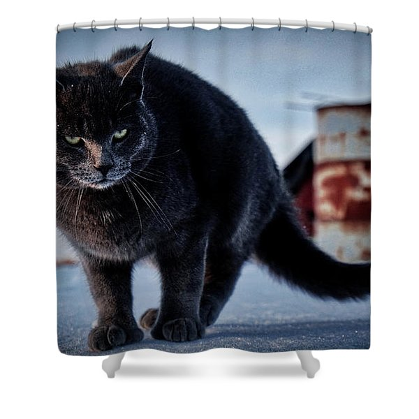 Grey Cat, Grey Mood Shower Curtain