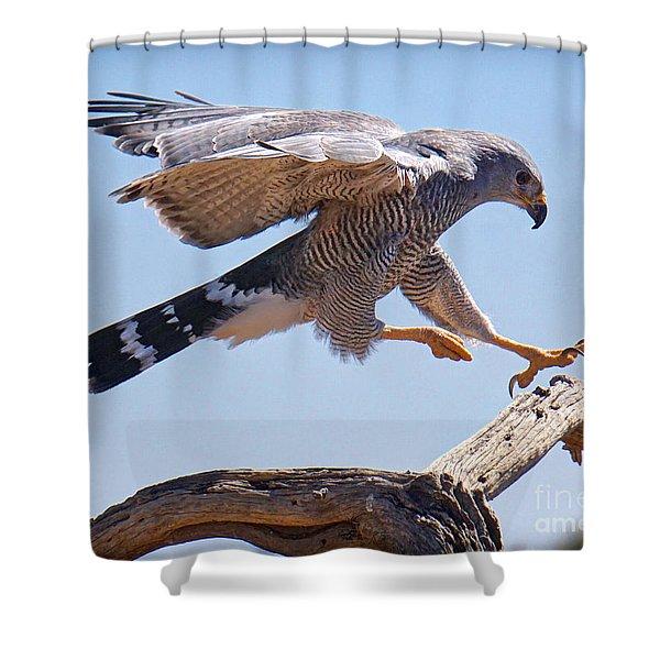 Grey Hawk Alights Shower Curtain