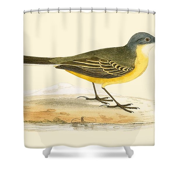 Grey Headed Yellow Wagtail Shower Curtain