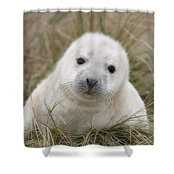 Grey Seal Pup Shower Curtain