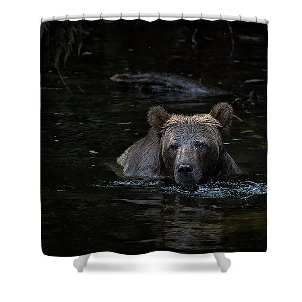 Shower Curtain featuring the photograph Grizzly Swimmer by Randy Hall