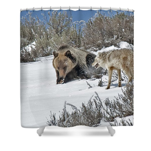 Grizzly With Coyote Shower Curtain