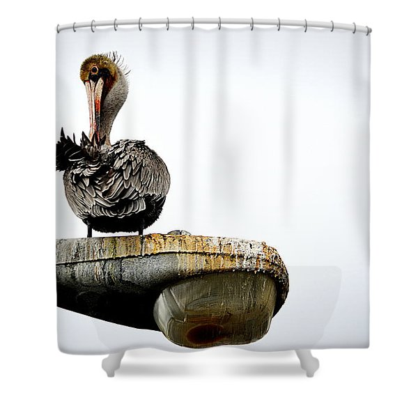 Grooming Time Shower Curtain
