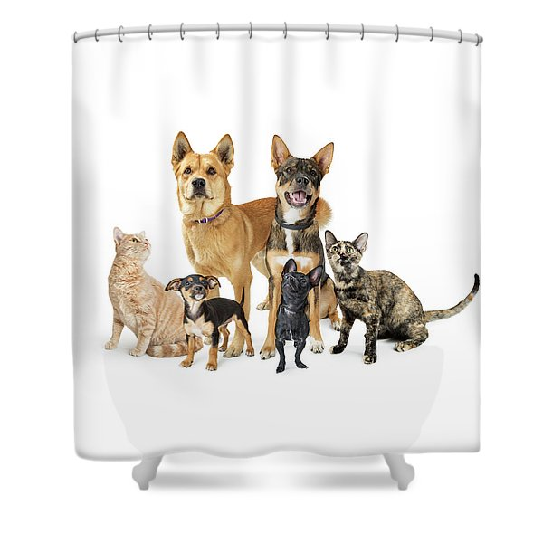 Group Of Cats And Dogs Looking Up On White Shower Curtain