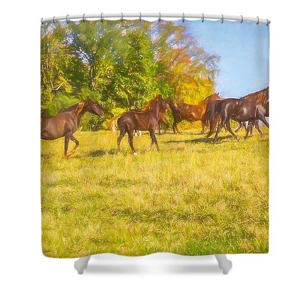 Group Of Morgan Horses Trotting Through Autumn Pasture. Shower Curtain
