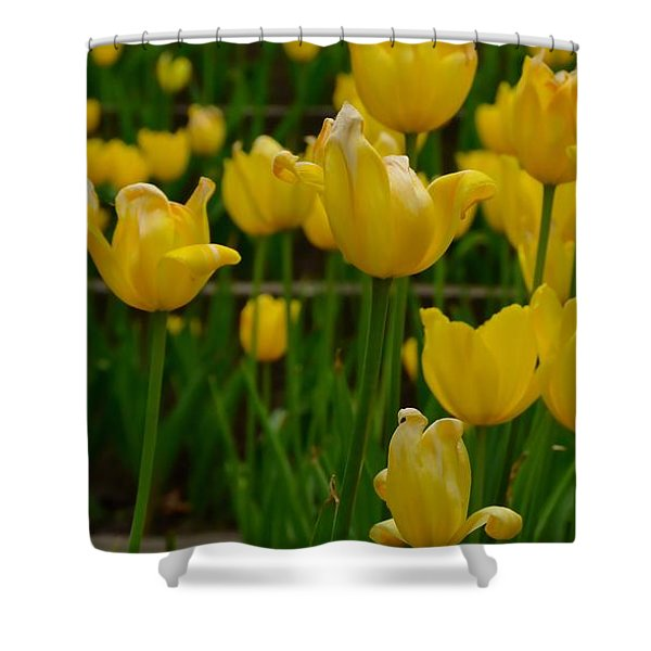 Grouping Of Yellow Tulips Shower Curtain