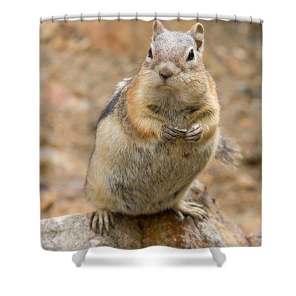 Grumpy Squirrel Shower Curtain