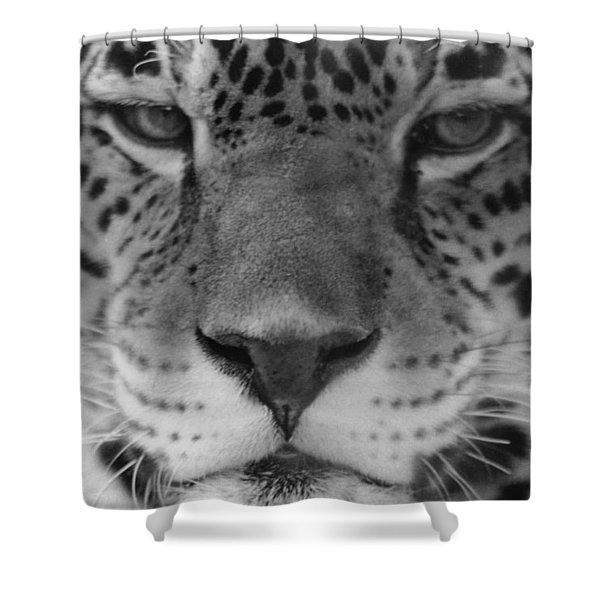 Grumpy Tiger  Shower Curtain