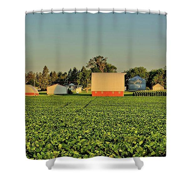 Grundy Beans Shower Curtain
