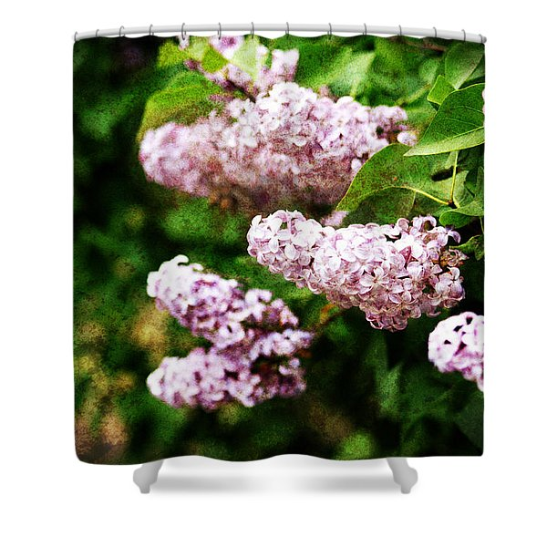Grunge Lilacs Shower Curtain
