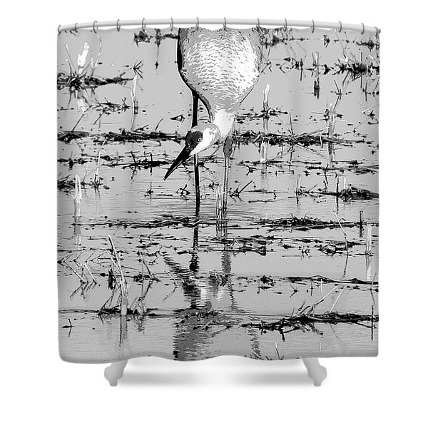 Grus Canadensis 2 Shower Curtain