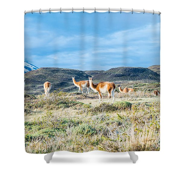 Guanaco In Patagonia Shower Curtain