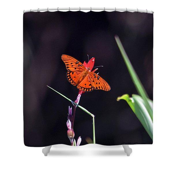 Gulf Fritillary Butterflyl Shower Curtain