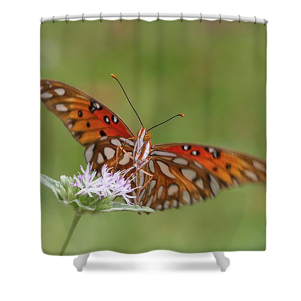 Gulf Fritillary On Elephantsfoot Shower Curtain