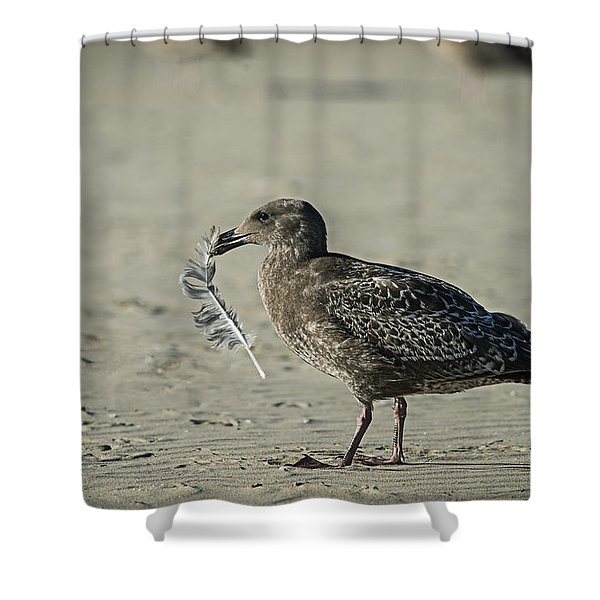 Gull And Feather Shower Curtain