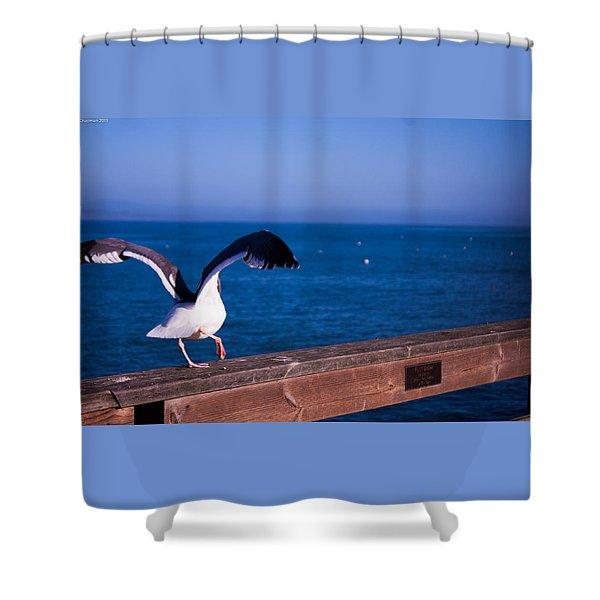 Gull Dance Shower Curtain