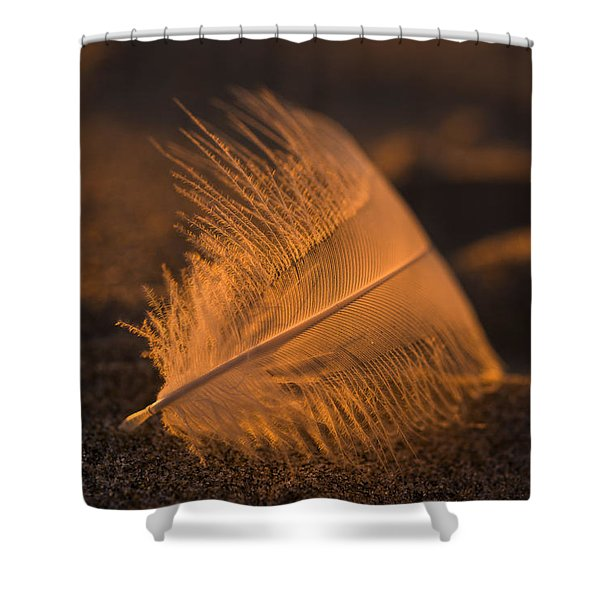 Gull Feather At Sunset Shower Curtain