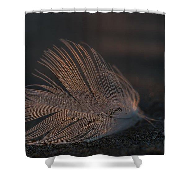 Gull Feather On A Beach Shower Curtain