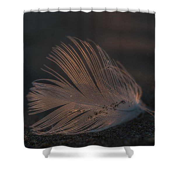 Gull Feather On A Beach Shower Curtain