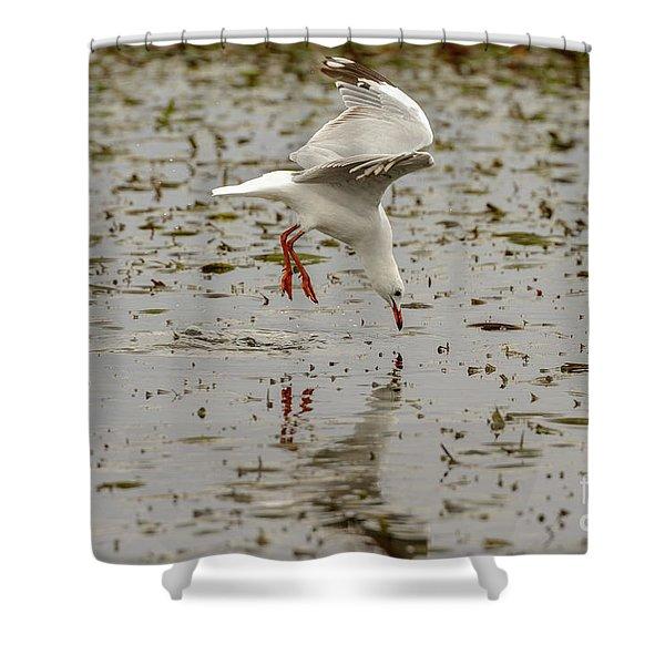 Gull Fishing 01 Shower Curtain
