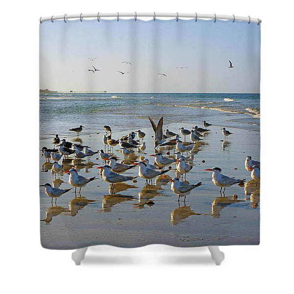 Gulls And Terns On The Sanbar At Lowdermilk Park Beach Shower Curtain